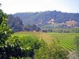 northern sonoma wine country