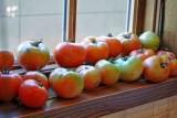 green tomato chili