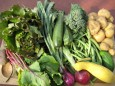 Eating Local - CSA and more