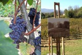 italy collage wine and painting