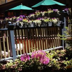 aspen hotel jerome flowers
