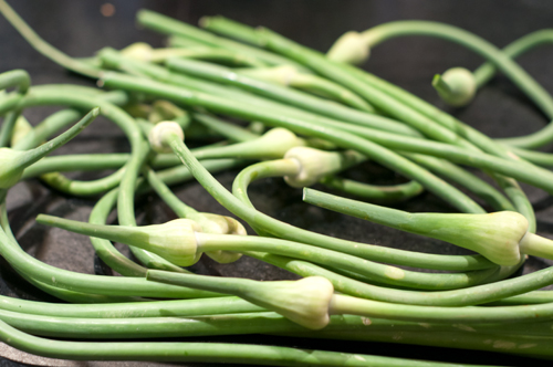 garlic scapes-1