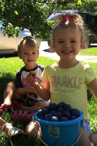 plum harvest unger babies-1