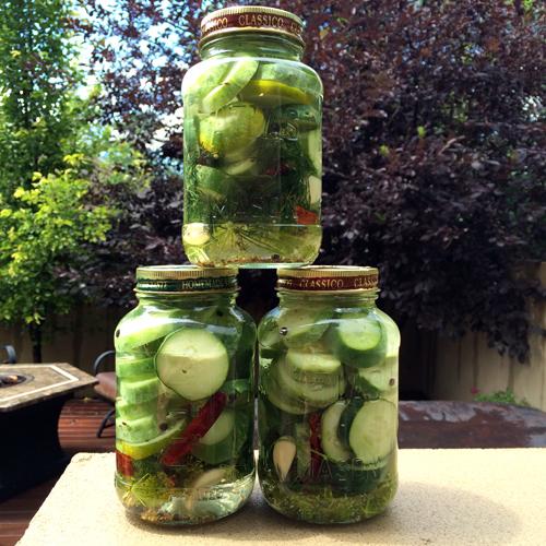 refrigerator pickles 2014-1