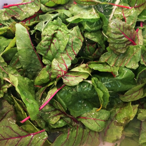 swiss chard harvest 2014-1