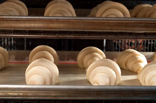 croissants rising-1