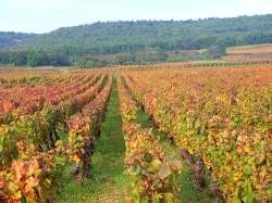 burgundy france DSCF6908