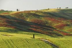 Taste-Vacations-Tuscany-Hills