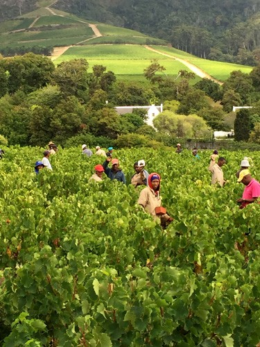 south-africa-winelands-IMG_2375