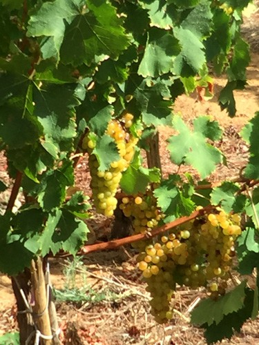 south-africa-winelands-IMG_2379