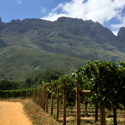 south-africa-winelands-IMG_2421