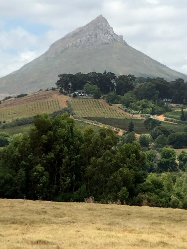 south-africa-winelands-IMG_2426