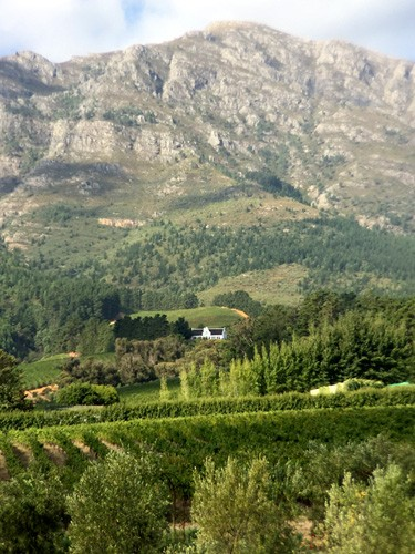 south-africa-winelands-IMG_2461