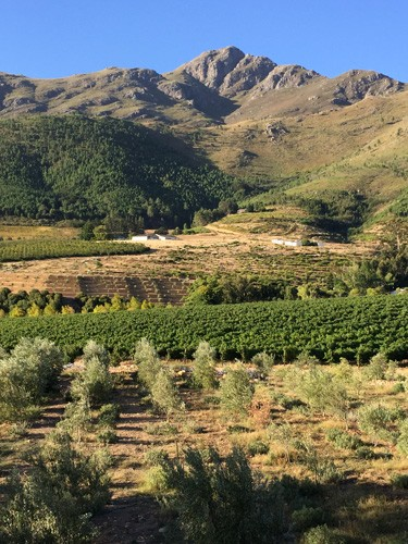 south-africa-winelands-IMG_2504