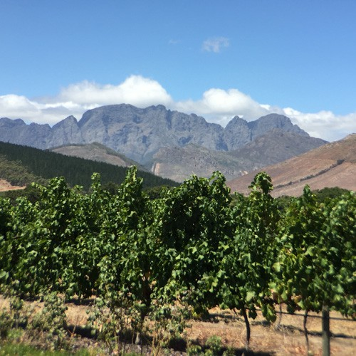 south-africa-winelands-IMG_2540