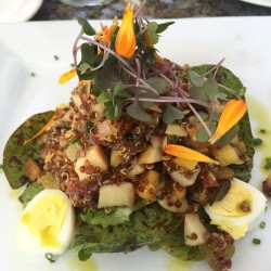 Sonoma-French-Garden-Restaurant-red-quinoa-salad