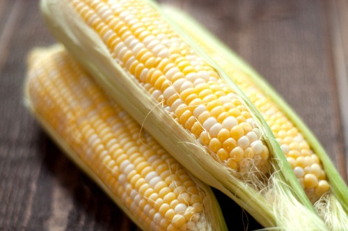 corn-ear-partially-shucked-1