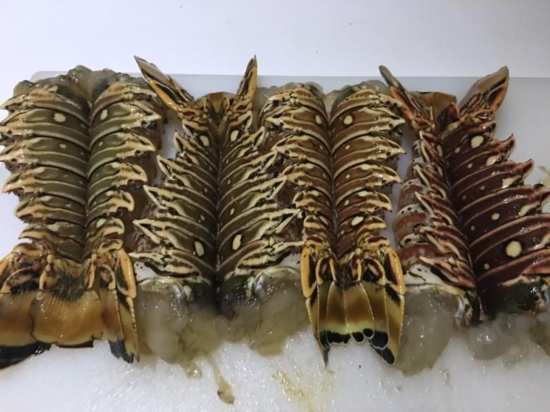 caribbean-bvi-anegada-lobster-tails