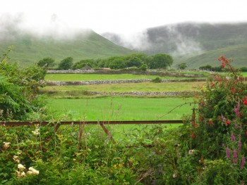 ireland-greenery