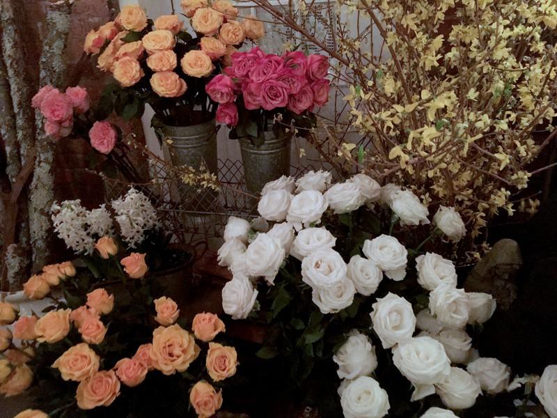 manhattan-palma-roses