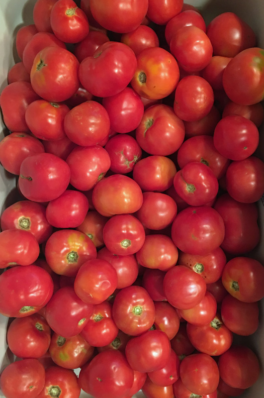 tomatoes-beefsteak